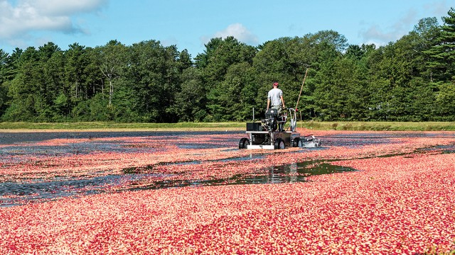 Can Ocean Spray CEO Randy Papadellis Save the Cranberry Business?