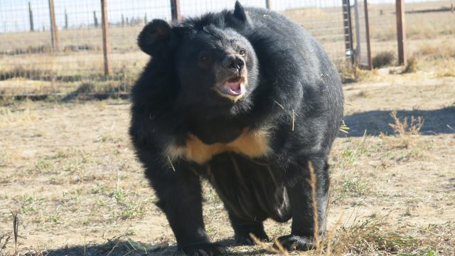 How a Bear Triggered an Epic Fight Over the Inner Lives of Animals