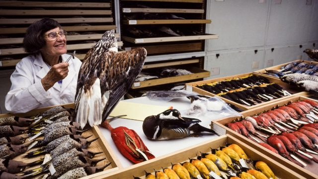 Life and Death and Feathers: The Remarkable Journey of Roxie Laybourne